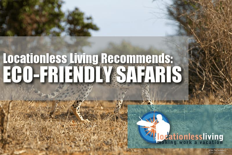 Why Going on a Safari is Eco-Friendly